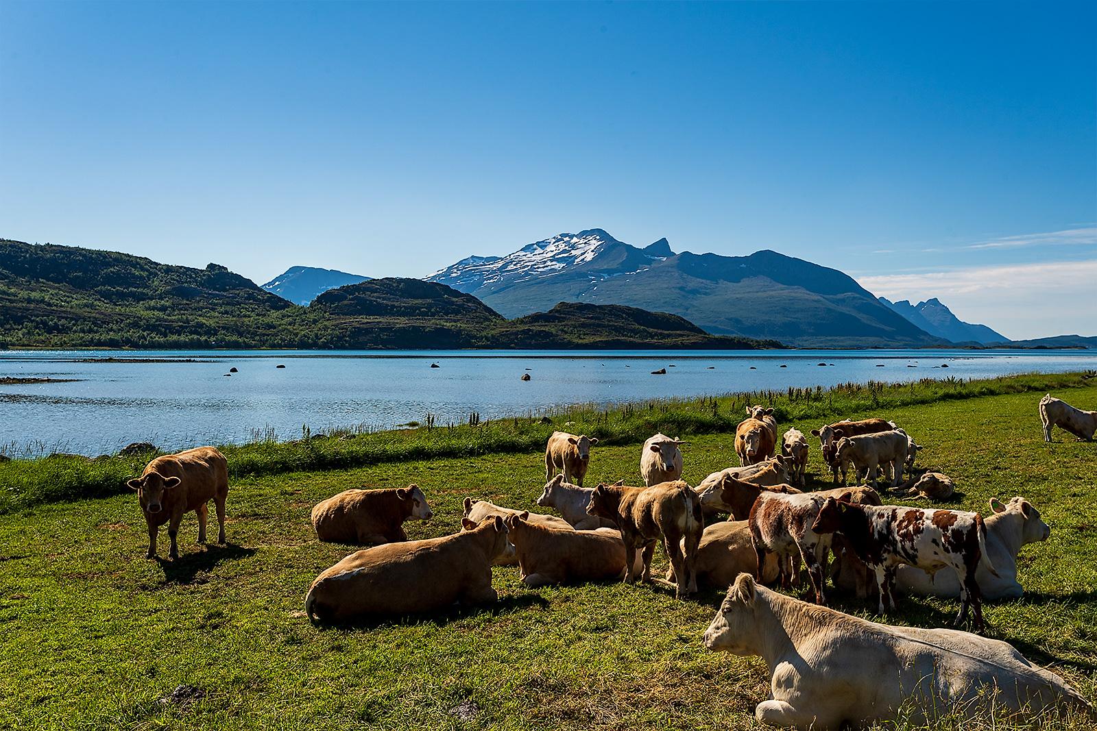 Warm summer day in Saursfjorden